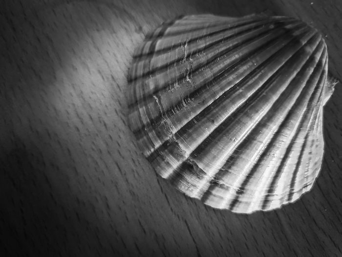 THE SEASHELL Environmental Conservation Environment Save The Nature Sea From Above  Structure And Nature City Marketing Marketing Sea Life Mussel Copy Space In Front Right On The Right Seashell Seashells One Shore Ocean Animal Blackandwhite Photography Blackandwhite Table Wood - Material Close-up Textured  Animal Shell Shell Detail Mollusk