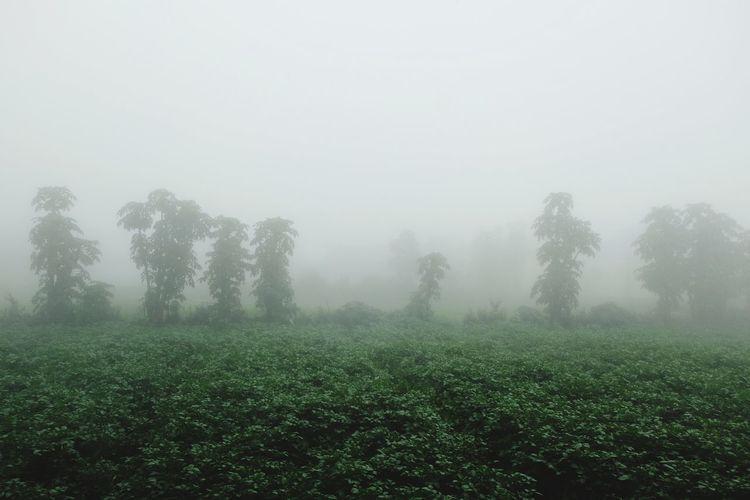 Tree Fog Rural
