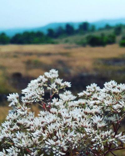 Trecking😎 Day 1 Trecking Treckingday HotSun Flower