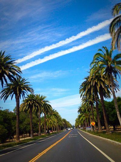 Palm Drive Paloalto Stanford University Cali California US Road Trip