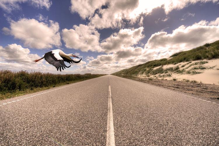 Stork flying over empty road against sky
