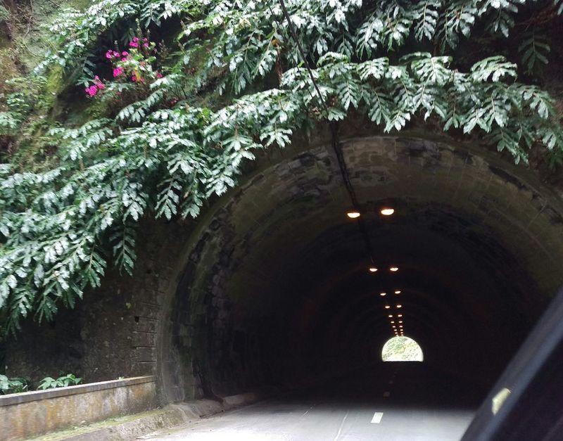 Tunnel S.miguel O Concelho Mais Lindo Dos Acores Povoação Portugal_em_fotos Visitazores Photography Traveling Nature