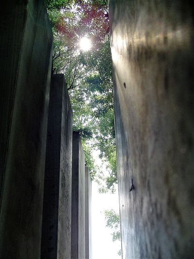 Capture Berlin Close-up Concrete Columns Day Garden Of Exile Illuminated Jewish Museum Libeskind Low Angle View No People Sun Sun In The Trees Tree