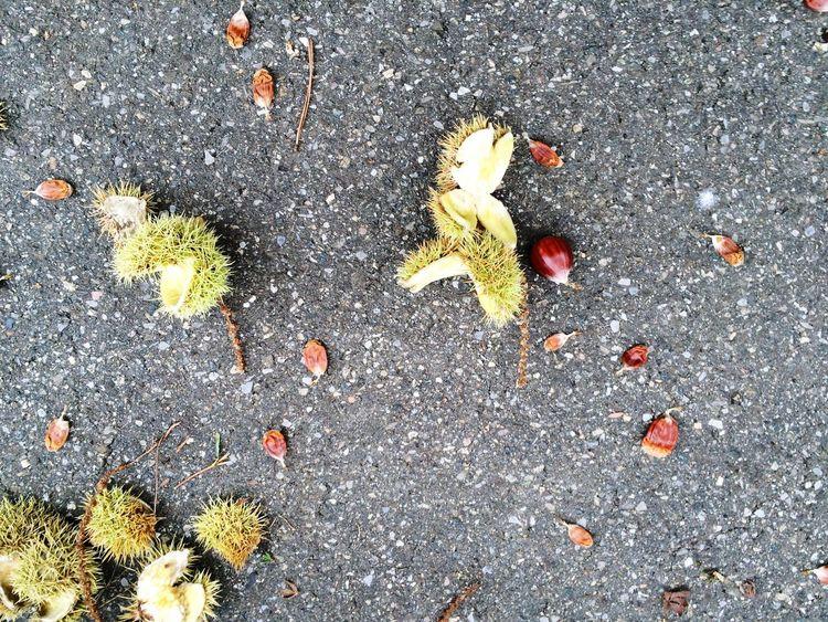 Kastanien Chestnuts Chestnut Hülle Shells Shell Autumn Leaves Pattern Pieces