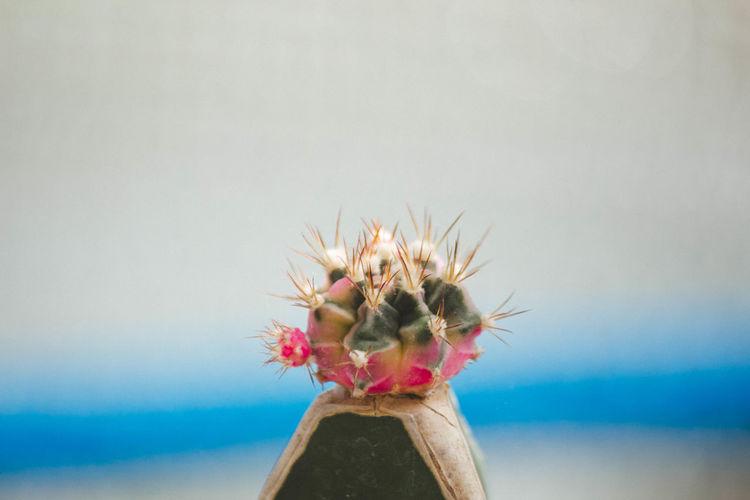 Close-up of cactus in sea against sky