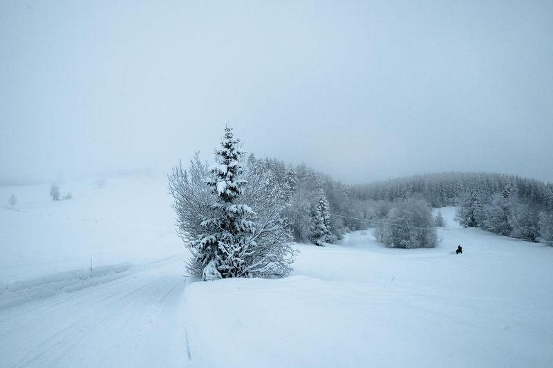 Hadeland, Norway Norway UNPOSED Candid Day Horse Scenics Snow Streetphotography Urban Phenomenology Winter
