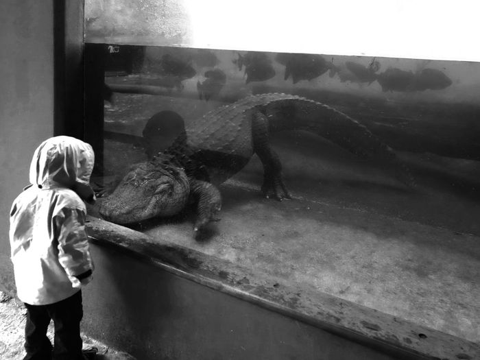 Max vs Croc. Staring Contest Max Alligator Crocodile Zoo Aquarium Staringcontest Blackandwhite Sony QX-100