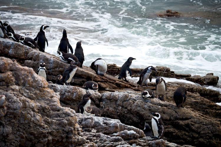 Flock of birds on rocks at sea shore
