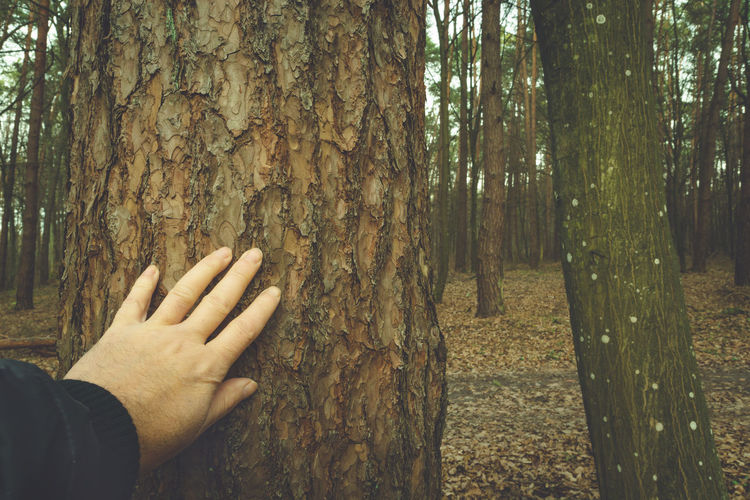 Cropped hand of person on tree trunk in forest