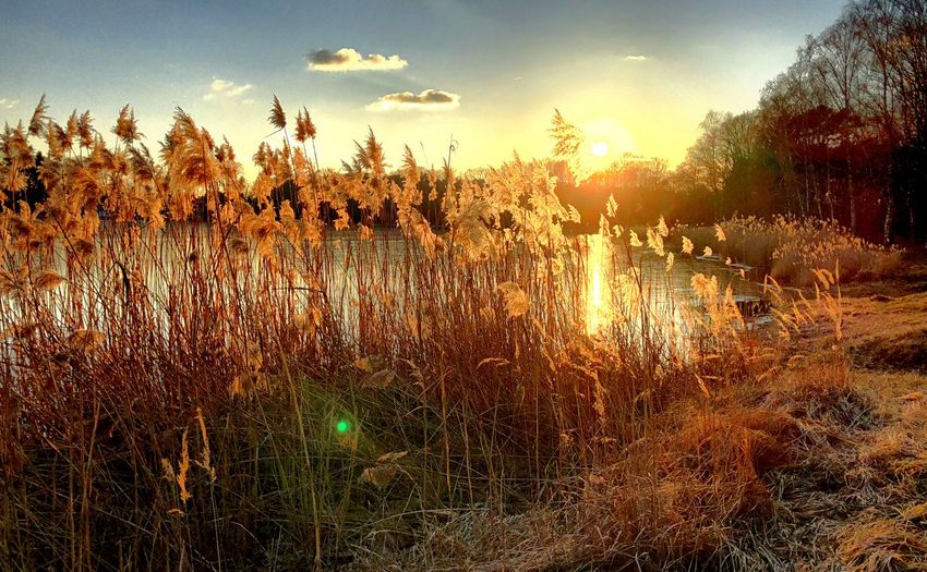 Nature Growth Grass Outdoors Tranquility Field Sky