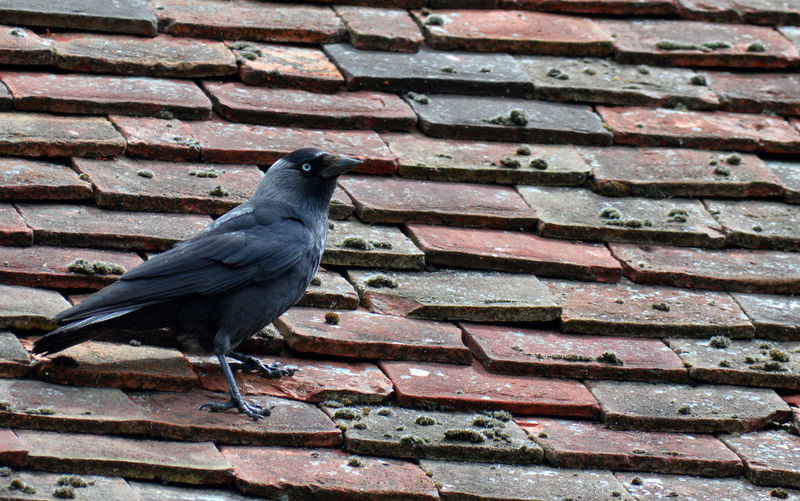 Close-up of bird perching on brick wall