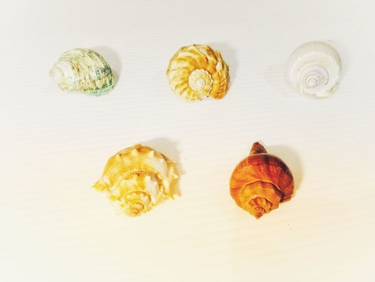 Sea Beach Ocean Coast Tropical Shells Seashells Sea Shell Group Set Collection Shells And Rocks Seaside Stone Sea Shells🐚 Rocks And Shells