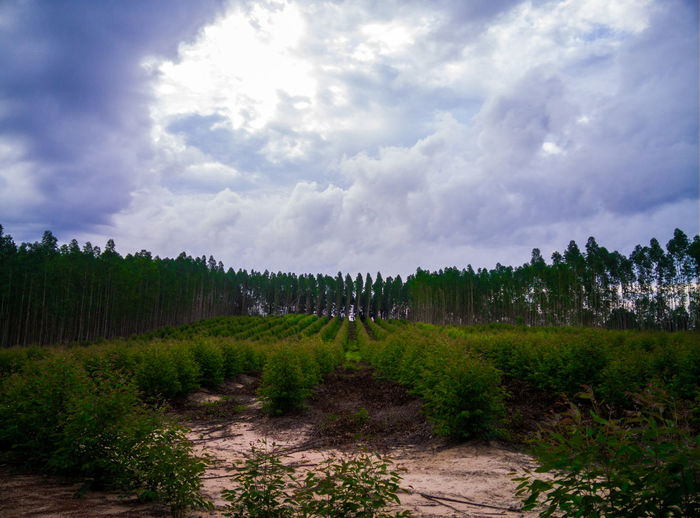 Nature view Cloud - Sky Sky Plant Tree Beauty In Nature Scenics - Nature Nature Landscape Land Environment Tranquility Tranquil Scene Growth Day No People Non-urban Scene Field Forest Outdoors Grass