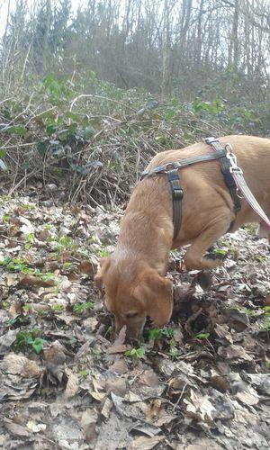 One Animal Tree Dog Unterwegsunddraußen Hunderunde Go Out And See The Nature Spazieren Und Fotografieren Im Wald Domestic Animals Animal Themes Pets Outdoors