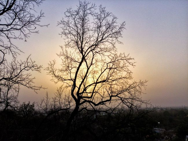 Tree Sky Plant Beauty In Nature Sunset Silhouette Tranquility Bare Tree Outdoors Growth Tranquil Scene No People Scenics - Nature Idyllic Low Angle View Nature Non-urban Scene Branch Sun Dusk
