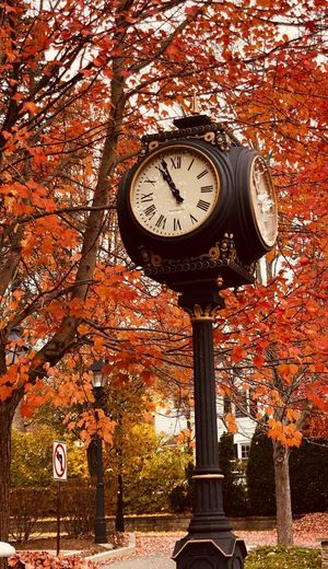 Fall Clock Time No People Tree Clock Face Low Angle View Architecture