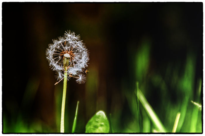 Beauty In Nature Blooming Close-up Cruagh Woods Dandelion Day Dublin Dublin Mountains Flower Flower Head Focus On Foreground Fragility Freshness Growth Ireland Irelandinspires Ireland🍀 Nature Outdoors Plant Selective Focus Softness Stem Uncultivated Wildflower