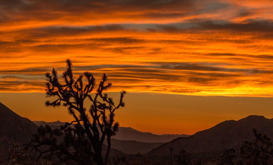 The nightfall is approaching!🌞🌞 Sunset Landscape Nature Scenics Tree Cactus Cactus Tree Silhouette Sunlight Plant Gold Colored Cloud - Sky Sky Beauty In Nature Mountain Multi Colored Sunsetindesert Desert SunsetInMountains Dramatic Sky in Arizona United States