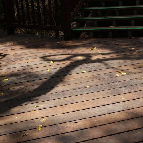 蘭潭外拍 蟬鳴真的讓我耳鳴了 蜻蜓一點都不怕人😂 一個人的森林步道 顯得很格格不入 保持寧靜愜意腳步 樹蔭 樹影