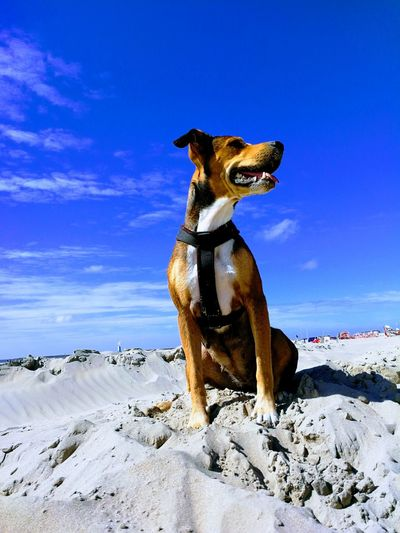 The Week On EyeEm Sand Beach Dog One Animal Animal Pets Domestic Animals Nature Outdoors Mammal Sky Day Animal Themes No People Full Length Portrait Investing In Quality Of Life