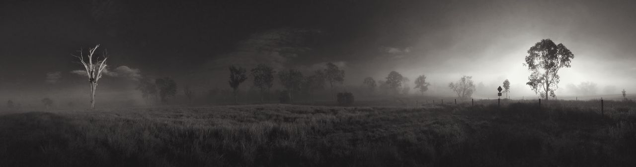 Tree Nature Field Tranquility Growth Landscape Tranquil Scene No People Beauty In Nature Outdoors Scenics Sky Grass Rural Scene Agriculture Day Monochrome Photography Panorama Wide Shot The Great Outdoors - 2017 EyeEm Awards