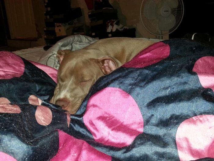 She Got It Made!!  Not Sleeping Alone Tonight