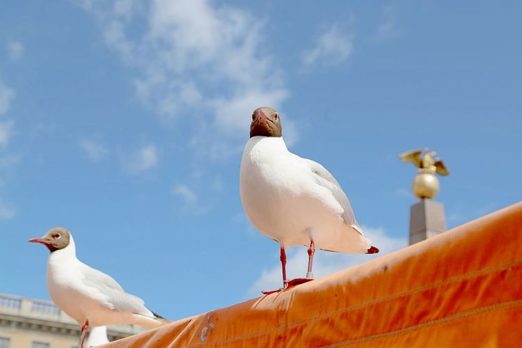 Low Angle View Of Seagulls Perching Against Sky