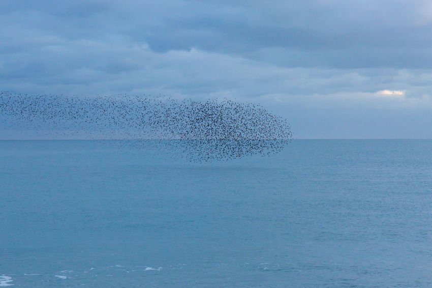 A Murmuration of Starlings over the sea at Brighton Brighton Murmuration Of Starlings Abundance Beauty In Nature Birds Day Horizon Over Water Murmuration Nature No People Outdoors Scenics Sea Sky Starlings Swarm Swarm Of Birds Tranquility Water Waterfront