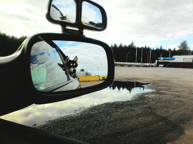 Dog animal Husky Car Travel Traveling Girl Dog Car Transportation Car Mode Of Transport Land Vehicle Reflection Side-view Mirror Street Road Cloud - Sky Sky Cloud Day Vehicle No People