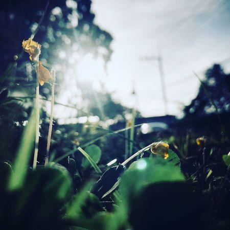 Light Close-up Plant Flower