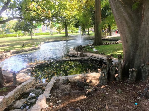 Tree Water Outdoors Day Nature Growth No People Beauty In Nature Spraying