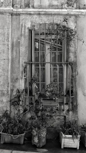 Le panier Potted Plant Potted Plants Street Streetphotography Street Photography Marseille Urban Le Panier Plant Cityscape Blackandwhite Black And White Black & White Blackandwhite Photography Bnw Bnw_collection Bw Bw_collection Window Architecture Close-up Built Structure Building Exterior Window Box Growing Street Scene Houseplant