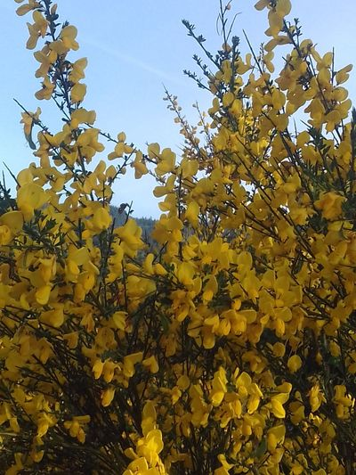 Yellow! Nature Growth Beauty In Nature Flower No People Outdoors Freshness Fragility Distant Vapor Trail