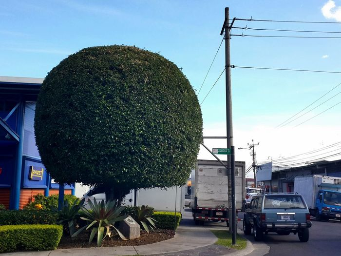 I really admire the gardener that gave that perfect shape to that tree (De verdad admiro al jardinero que le dio esa perfecta forma a ese árbol). Cityscapes Costa Rica Gardeners Gardening Modern Outdoors Prunning Tree Trees And Sky Ficus Benjamina