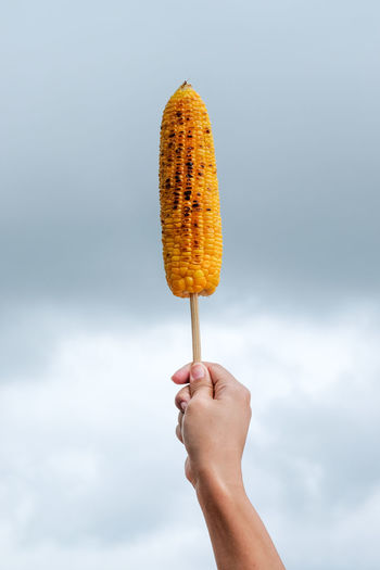 Cropped Hand Holding Sweetcorn Against Cloudy Sky