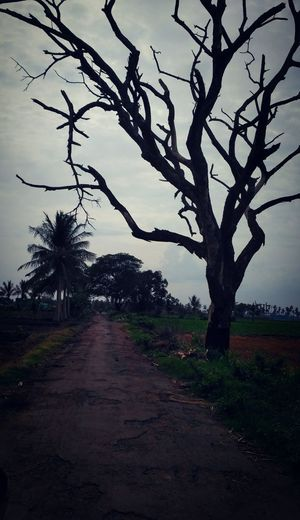 Tree No People Bare Tree Landscape Nature Day Beauty In Nature Outdoors Rural Scene EyeEm Best Edits EyeEm Best Shots Bare Branches Bare Trees Roadside Tree Roadside Shots Indian Village Roads Indian Roads EyeEmNewHere Let's Go. Together.