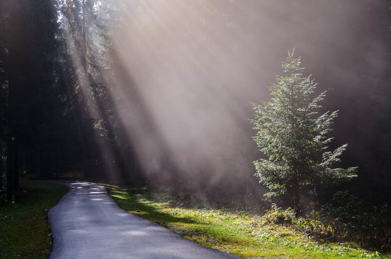 Tree In Sunlight In Forest