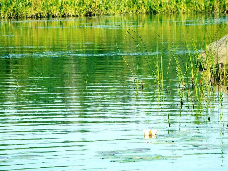 Algonquin Park Algonquinprovincialpark Nature Lily Waterlily