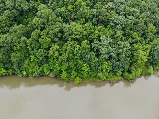 Aerial View Mavic Air Aerial Shot Aeriel Photo Dronephotography Tourism Destination Forest Photography Trees Forest Textures and Surfaces Textured  Treelines Texture Nature Nature Photography Water Tree Reflection Plant Green Color Lush Foliage Greenery Lush - Description Green Stream Grassland Lakeside Water Drop Woods Standing Water Countryside