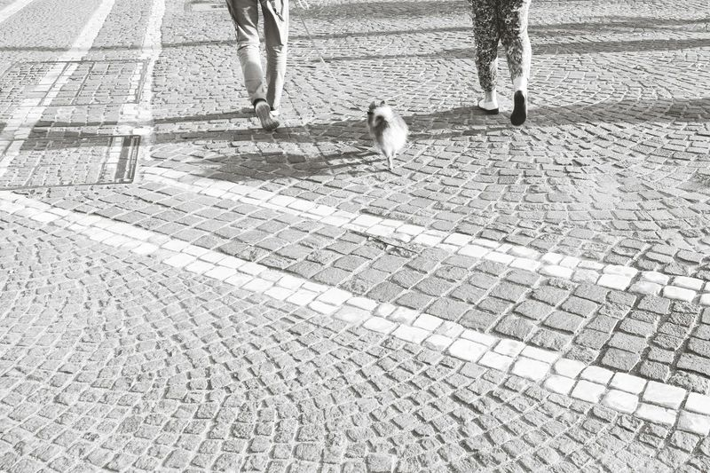 Walking the dog.... Daily Commute Monochrome Black & White Dogslife Adogslife Legs Looking Down Cobblestones Cobblestone Streets