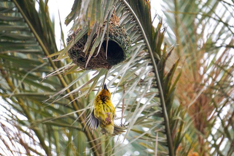 Weaver Bird 3