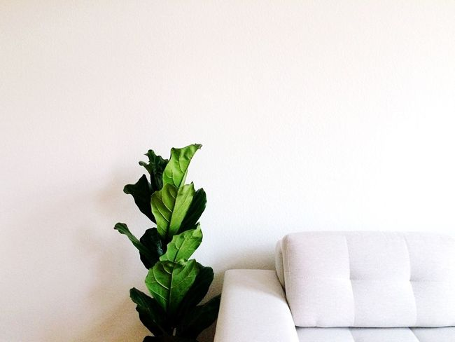 Indoors  Home Interior Sofa Copy Space No People Table Leaf Plant Living Room Home Showcase Interior Close-up Flower Freshness Day