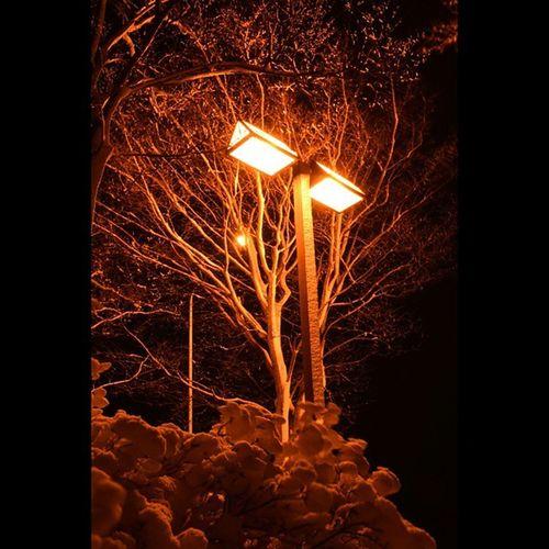 雪景色 風景 街灯