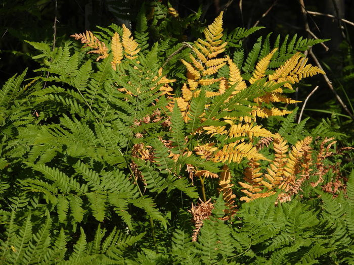 High angle view of fern leaves on tree in forest
