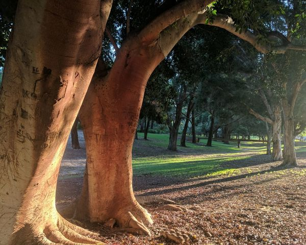 EyeEm Selects Tree Nature Outdoors No People Beauty In Nature Day Sky Shadows & Lights Park Life An Eye For Travel
