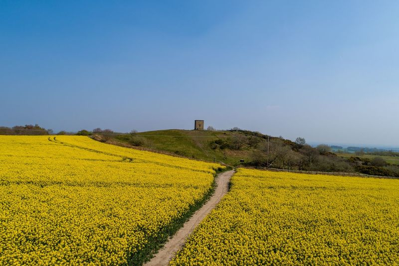 Rapeseed blossom Rapeseed Field Rapeseed Rapeseed Flowers Drone View Drone Photography Droneshot Drone  Aerial Photography Aerial View Spring Flowers Billinge Spring Plant Beauty In Nature Flower Sky Agriculture Field Growth Clear Sky Crop  Nature Yellow Flowering Plant Scenics - Nature Landscape Rural Scene No People Environment