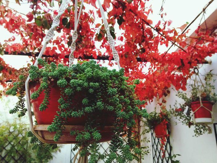 Tree Branch Red