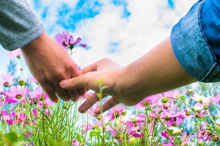 Cropped hands of couple holding pink cosmos against sky