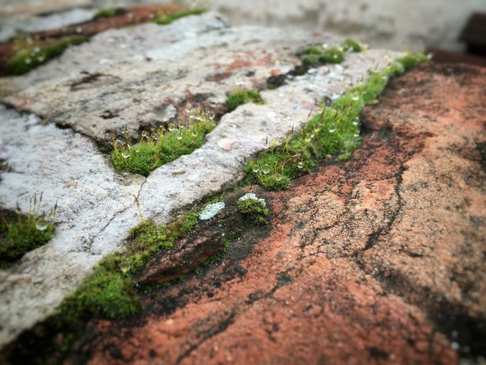 never give up Nature Moss Stone Lifefindsaway