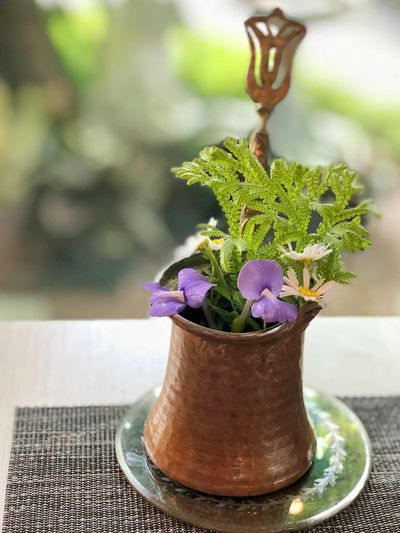 Afternoon with Wild flowers in brass vase Cafe Hopping Leafs Bright Light Afternoon Light Floralphotography Afternoon Tea Tea Time Plant Potted Plant Growth Focus On Foreground Table Close-up Green Color Nature Flower Purple Freshness Houseplant Decoration